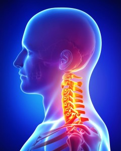 15181687 - anatomy of pain in neck of male
